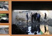 اجرای طرح ضربتی مبارزه با حیوانات موذی در معابر منطقه2