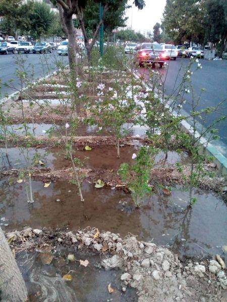 استفاده از آب های زیرزمینی شمال شرق تهران برای آبیاری فضاهای سبز شهری