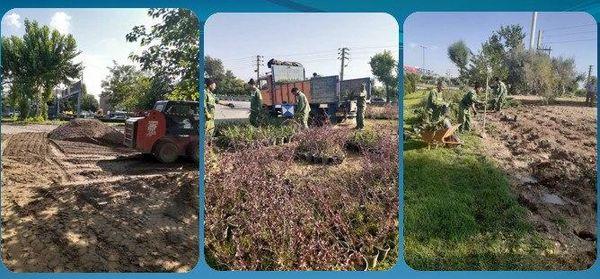 کاهش چشمگیر چمنکاری در فضای سبز منطقه15
