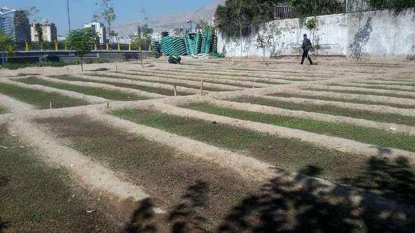 تکثیر گل و گیاه در پارک ملت منطقه 3