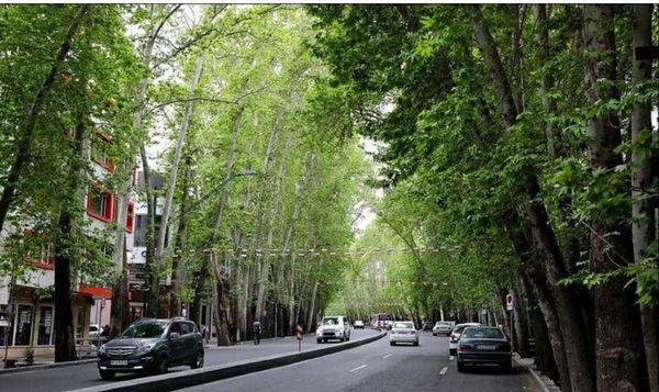 واکاری درختان از بین رفته خیابان ولیعصر (عج) در چند سال گذشته