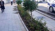 کاشت  بیش از 9 هزار  درختچه زینتی در منطقه 13
