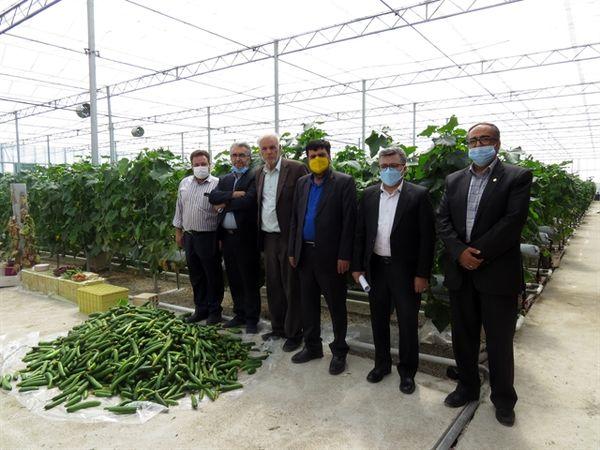 آغاز بهره برداری از دو طرح تولیدی مشارکتی بانک کشاورزی در دامغان