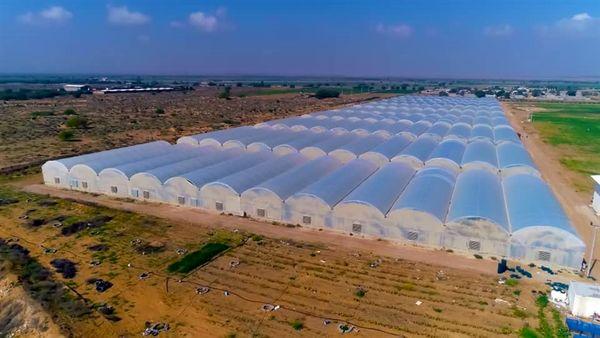 حمایت 109 میلیاردی بانک کشاورزی از راه اندازی گلخانه سبزی و صیفی در استان بوشهر