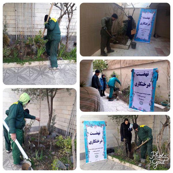 12000 اصله درخت در غرب تهران کاشته می شود