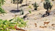 حیات وحش قطب گردشگری شرق تهران ، جاذبه ای برای دوستداران طبیعت
