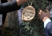"""به مناسبت هفته درختکاری، اجرایی می شود طرح """"درخت دوستی بنشان"""" در اراک"""