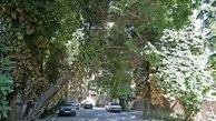 طرح محله سبزدر منطقه2 اجرا می شود