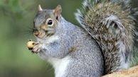 ورزش کردن جالب یک سنجاب! +تصاویر