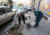 پرونده های گیاه پزشکی درختان کهنسال در بخش مرکزی شهر تهران تکمیل شد