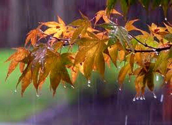 پایان سال آبی با 199 میلی متر بارندگی در استان مرکزی