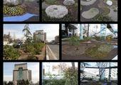 اجرای طرح ساخت سبد گل با ضایعات هرس