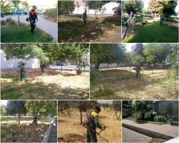 پاکسازی فضاهای سبز منطقه 15 از علف های هرز