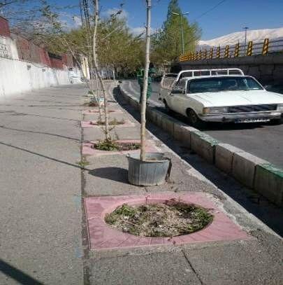 اجرای مرحله اول کاشت یک هزار درخت در معابر منطقه سه تهران