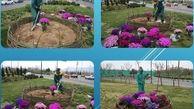 کاشت 5 هزار و 600 پیاز و گلدان لاله در منطقه15