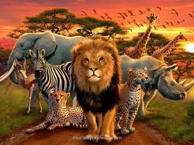 نادر ترین موارد پزشکی در دنیای حیوانات + عکس