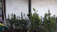 کاشت 600 درختچه در خیابان ولیعصر(عج)