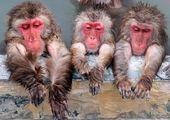 وقتی میمون دندانپزشک میشود!+ عکس