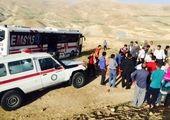 تیمار یک گرگ زخمی +عکس